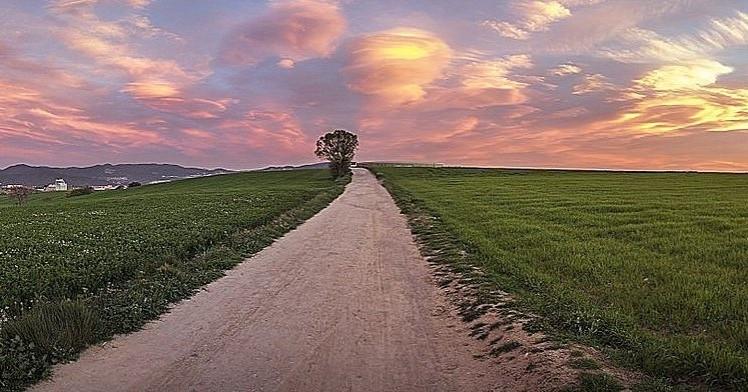 Caminada Nocturna a Gallecs