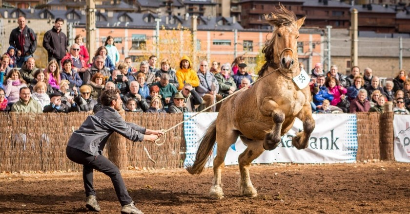 National contest of the Catalan Pyrenean horse in Puigcerdà