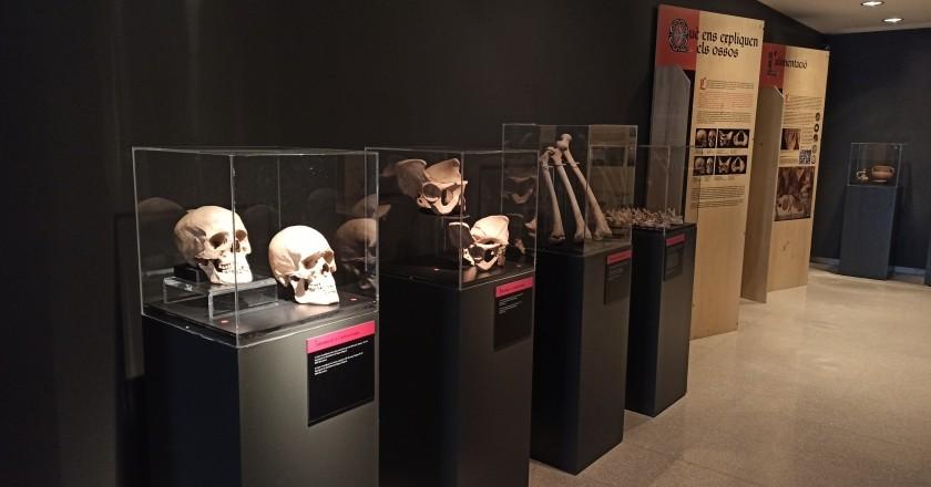 Exposition d'os au Museo de la Noguera