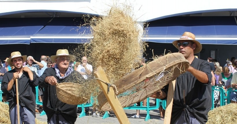 Festa de la sega de l'arròs a l'Ampolla
