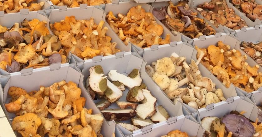 Mushroom Party in Santa Susanna