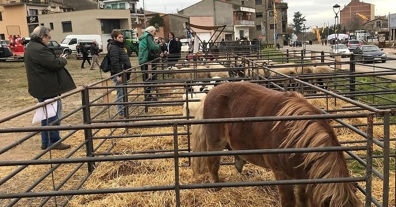 Feria de Santa Llucía en Prats de Lluçanès