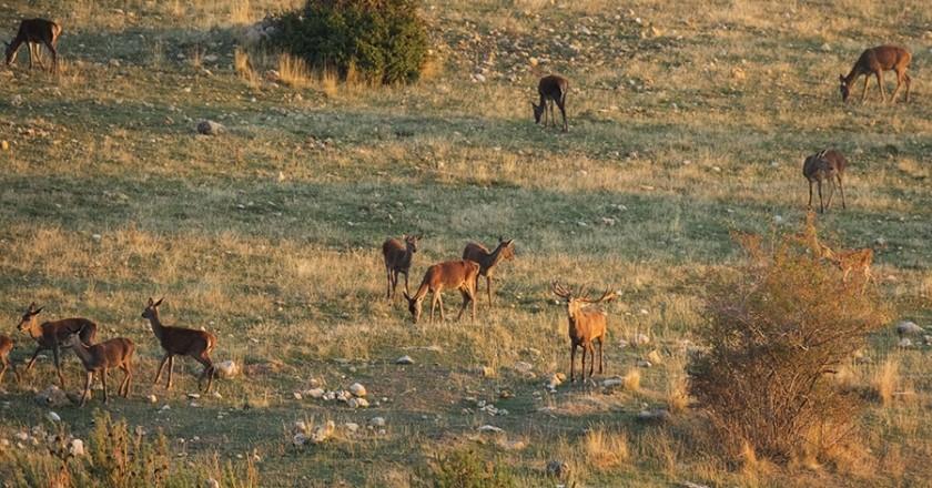 Disfruta de la berrea del ciervo en el Pirineo Leridano