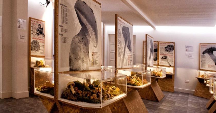 Inauguración de la segunda planta del Museo de la Seta de Montmajor