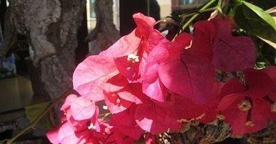 Flors i Violes al Museu