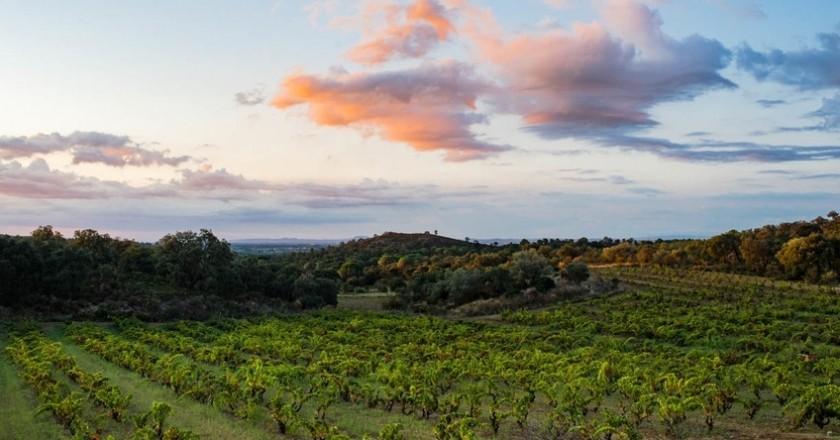 Tardes de vins i música a la fresca a Vinyes d'Olivardots de Capmany