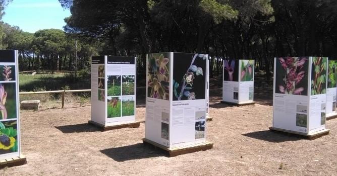 Visita guiada y exposición de Orquídeas en la Pineda del Remolar en Viladecans