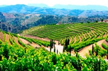 Terres del vi del Priorat