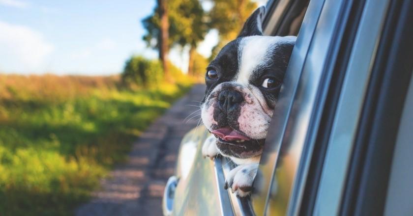 Lugares para visitar con tu mascota
