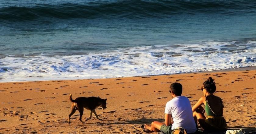 Las mejores playas de Cataluña para ir con perros