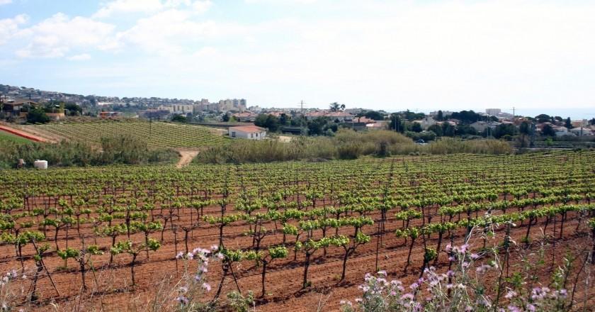 Fem enoturisme al Vallès Oriental