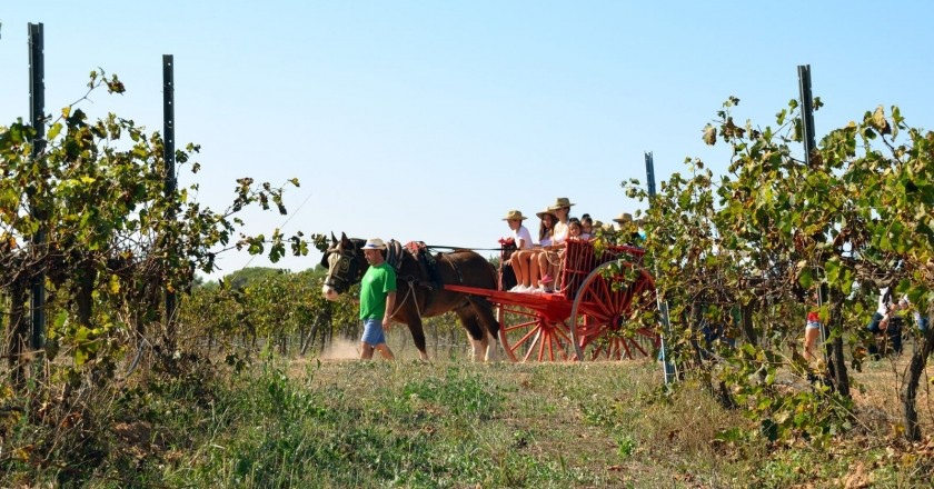Sorteo: ruta en carro entre viñedos + cata de vinos