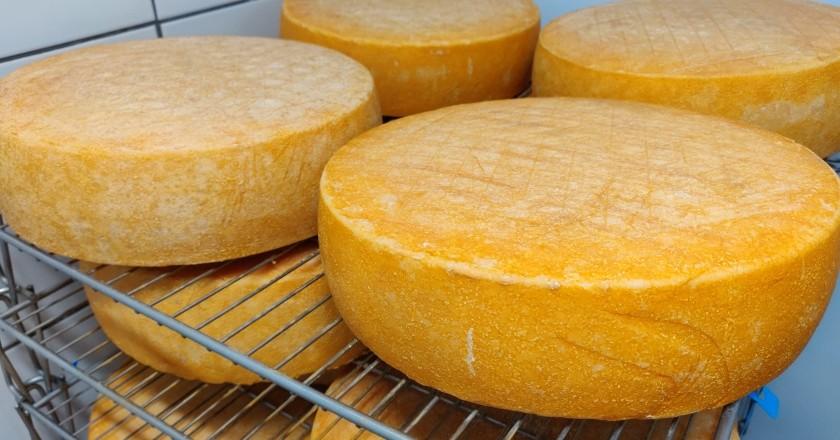 Trois fromageries primées que nous ne pouvons pas manquer plus haut, Llobregat