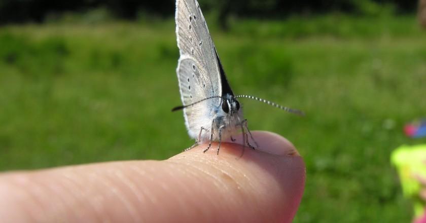 Taller i Sortida La màgia de les papallones