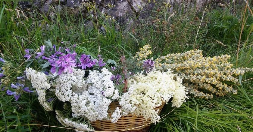 Taller / Sortida Plantes silvestres i el seu ús medicinal