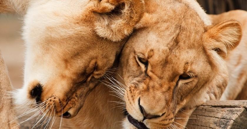 Safari a Kènia amb nens