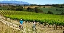 Bike & Taste - Ruta Autoguiada amb Bici Elèctrica pel Penedès