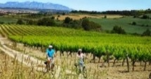 Bike & Taste - Ruta Autoguiada con Bici Eléctrica por el Penedès
