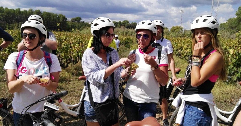 Bike & Taste - Self-Guided Route with Conventional Bike through the Penedès