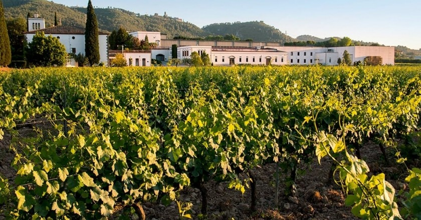 Visit winery & vineyard & tasting of 3 products in Bodegues Sumarroca