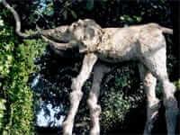 Gard Púbol Castell (Salvador Dali)