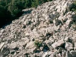 Els tarters dels rocs (aixecat pels manairons)