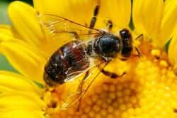 Producció de mel (Ruta de la Mel)