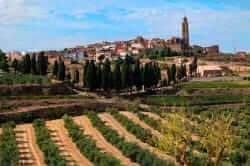 Corbera d'Ebre i vinyes vista des de Vilalba dels Arcs