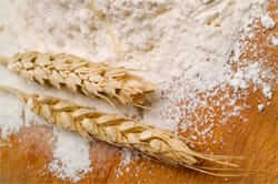 The bread in the Llucanes (wheat flour mill wheat)