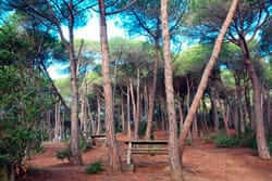 Pique-nique de Barcelone (Mataro Maresme Forest Park 2)