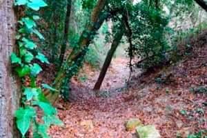Une promenade à travers l'Clariana ombragée (Zanja De La Socarrada)