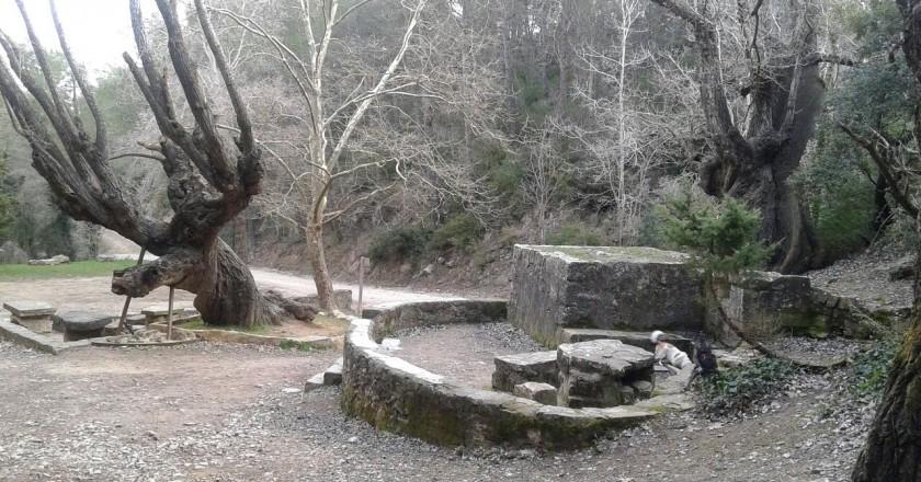 Bosc del Paradís a La Llacuna