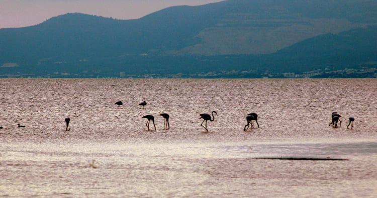 Delta de l'Ebre, la natura en estat pur