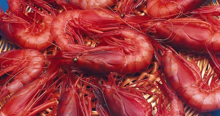 La découverte de les crevettes de Palamos