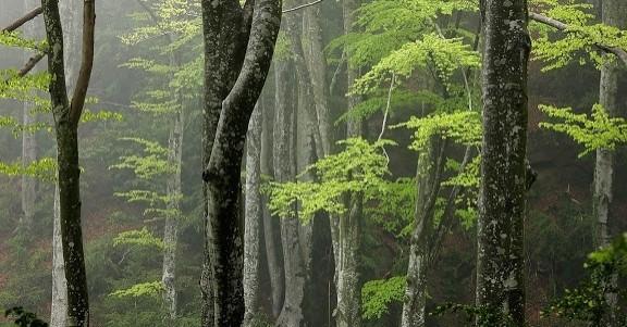 El bosc de la Ribera a Santa Maria d'Oló