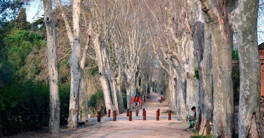 Boca de la Mina Route