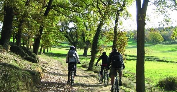 Route Forest of Casanoves - El Querol in Collsuspina