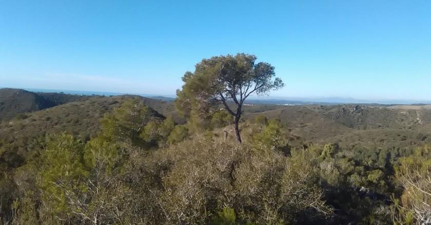 Route of the solitary pine in Roda de Berá