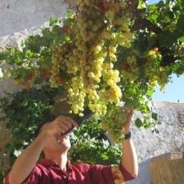 Activitat In vino veritas a Barberà de la Conca