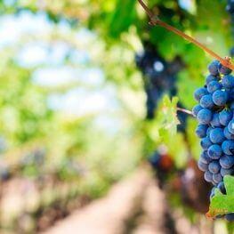 Festa de la Verema i Mostra de Vins a Sitges