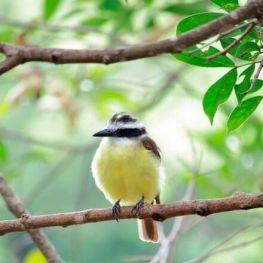 Dia Mundial de la Natura