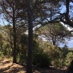 Bains dans la forêt à Tossa de Mar