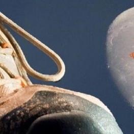 Caminada a la llum de la Lluna a Artesa de Segre