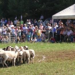 Concurso de perros pastor en Montnou en Odèn