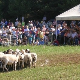 Concurs de gossos d'atura al Montnou a Odèn