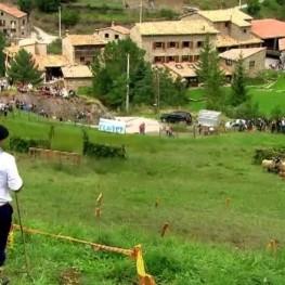 International Contest of Dogs Shepherds of Castellar de nHug