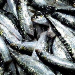 Diada del Pescador a Tossa de Mar
