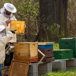 Experiencia apiturística en el Valle de Ribes de Freser