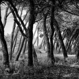 """Exposició de fotografia """"De fora endins"""" a Viladecans"""