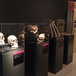 Exposición Huesos en el Museo de la Noguera